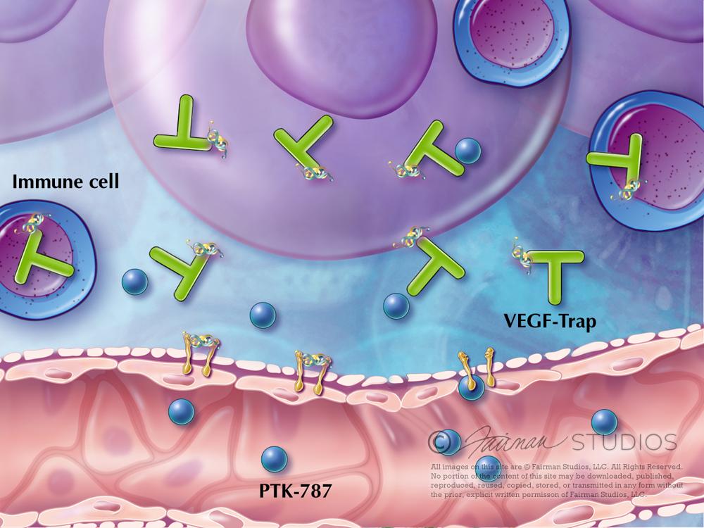 Angiogenesis Targeting