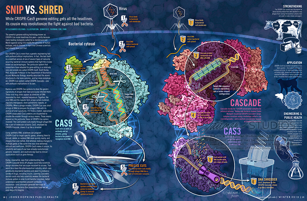 Snip Vs. Shred: CRISPR, CAS9, CAS3 and Cascade