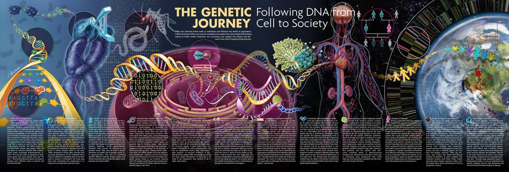 The Genetic Journey