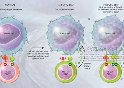 Natural Killer Cells